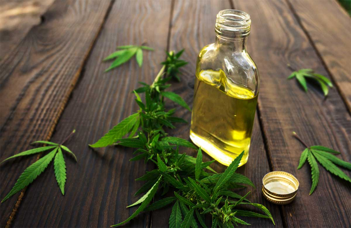 Cannabidiol oil (CBD oil) derived from hemp, a member of marijuana family of plants.