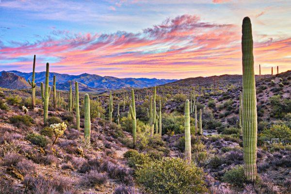 Where to buy CBD in Arizona, Buy CBD, CBD in Arizona, Arizona