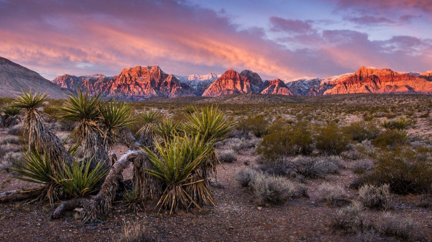 Where to buy CBD, CBD in Nevada, Nevada, buy CBD